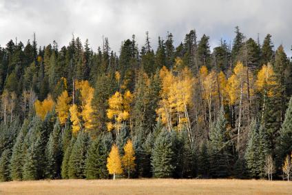Fall season in Arizona